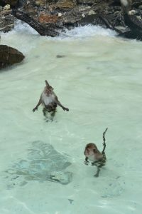 monkeys ao nang